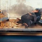 手游《哈利波特:巫师联盟》公开全新宣传影片